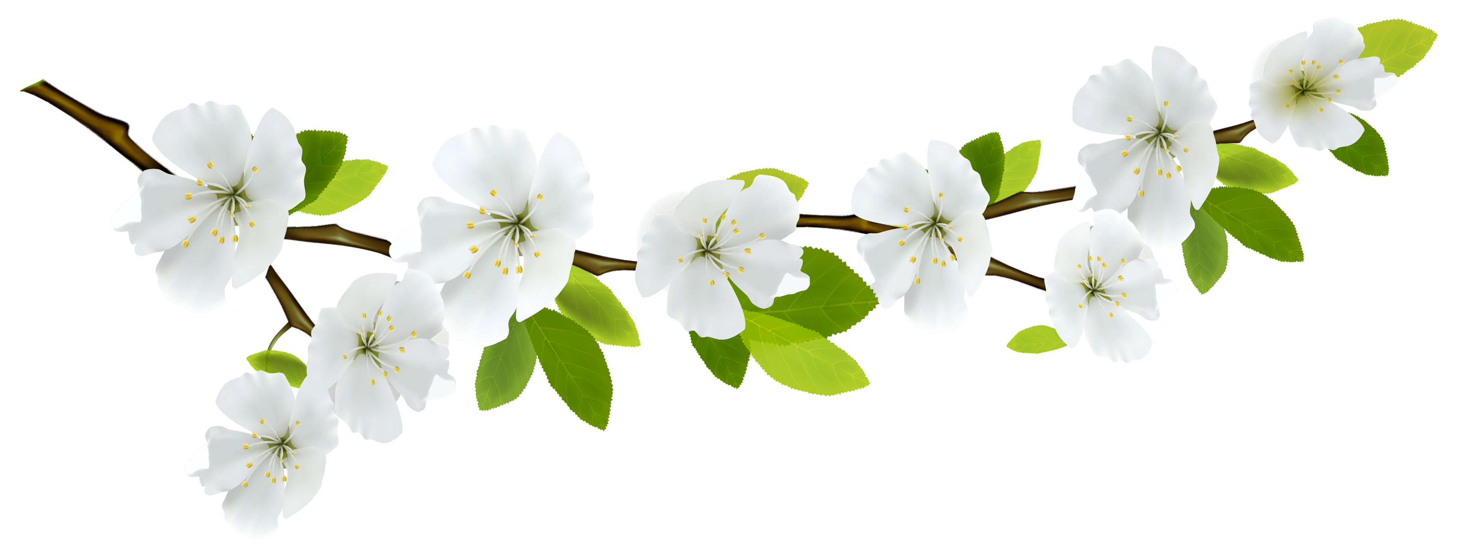 Download spring free transparent. White flower png