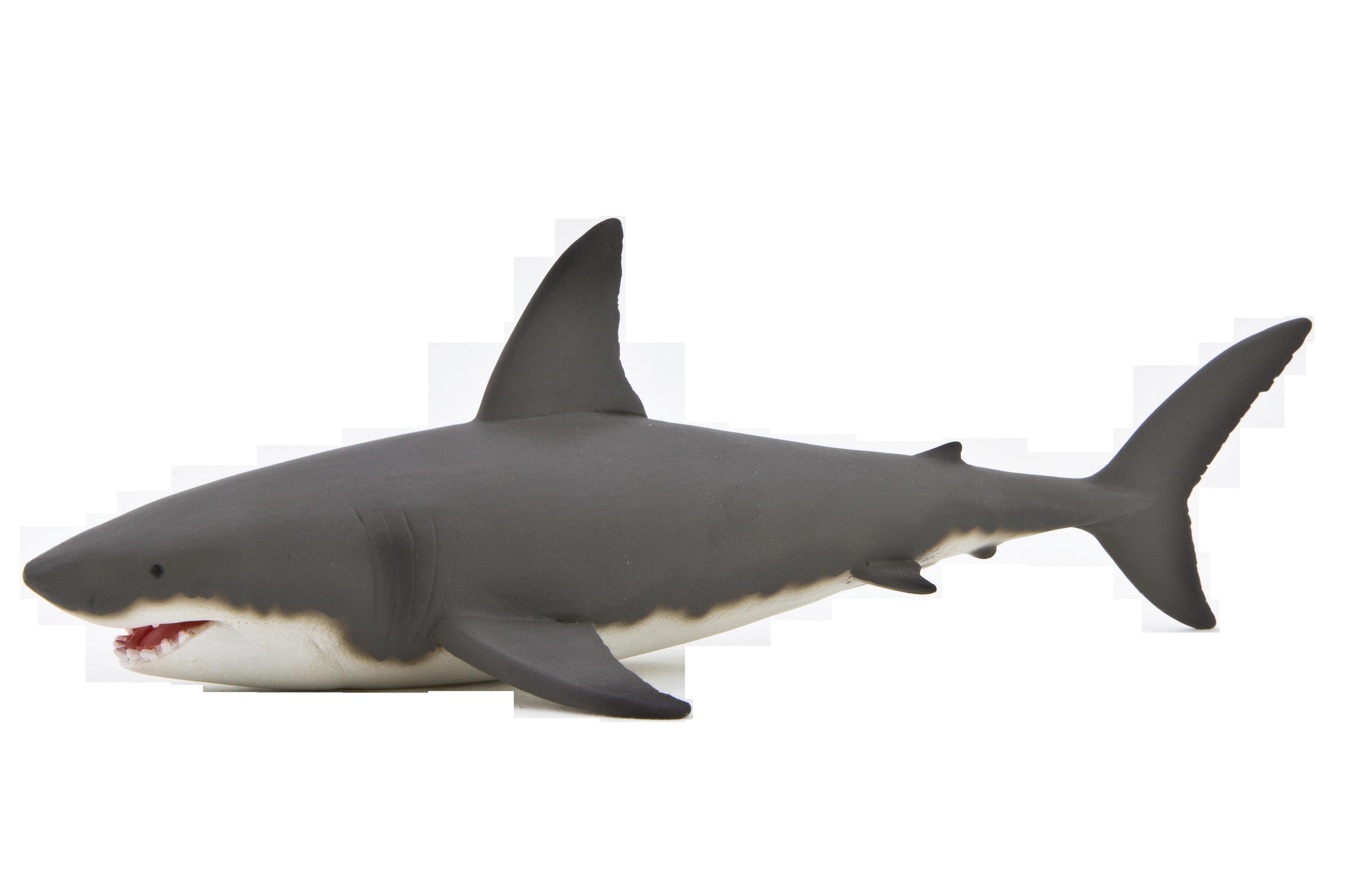 Sharks png images free. Clipart shark bull shark