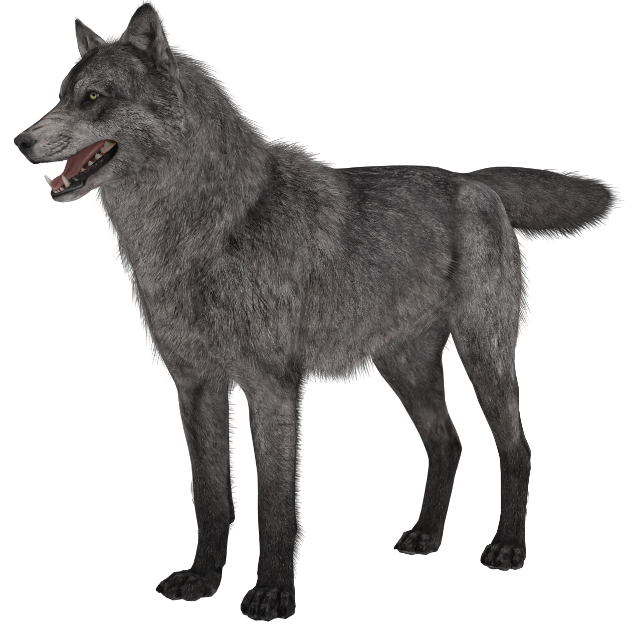 Wolf png picture gallery. Wolves clipart transparent background