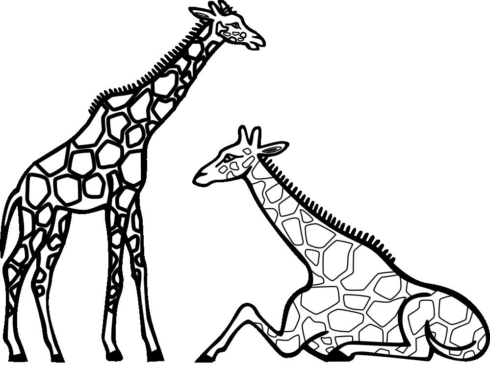 Clipart panda black and white. Giraffe free images giraffeclipartblackandwhite
