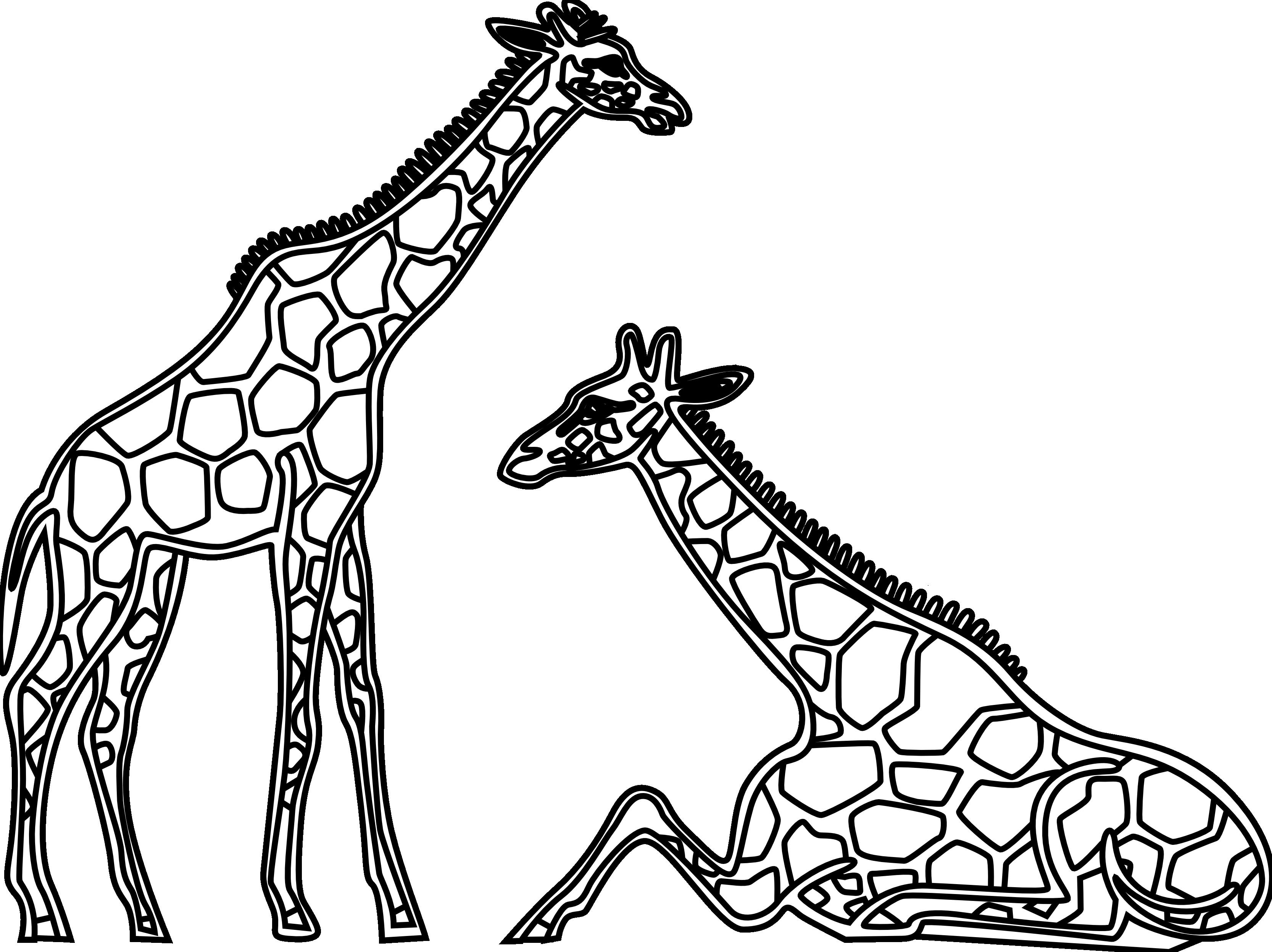 Clipart giraffe black and white. Clip art panda free