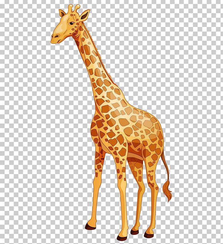 Baby giraffes cartoon northern. Clipart giraffe caricature