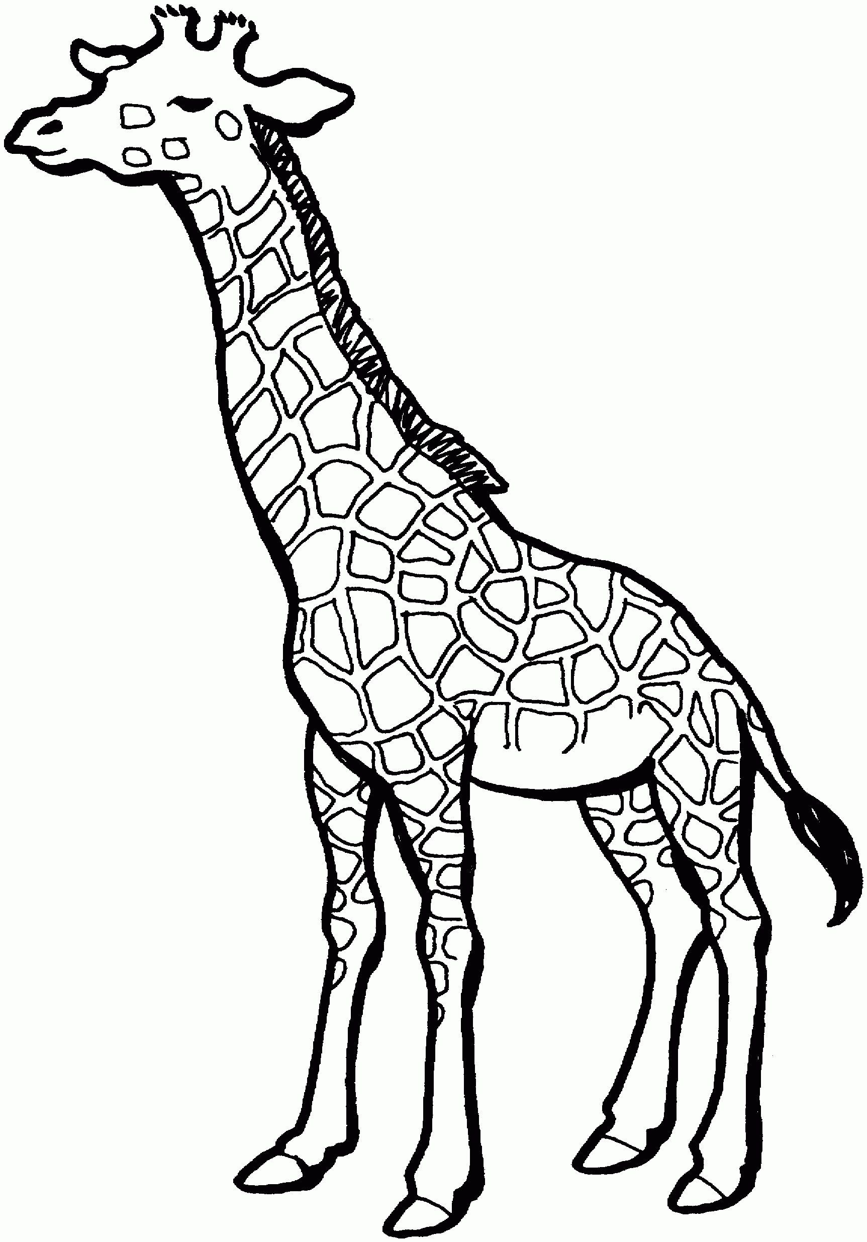 Collection of free download. Giraffe clipart outline