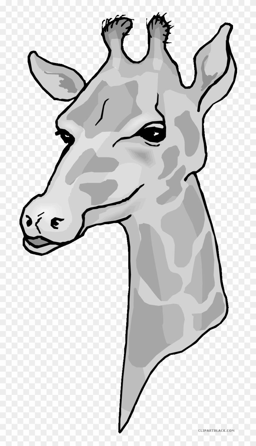 Clip art png download. Giraffe clipart head