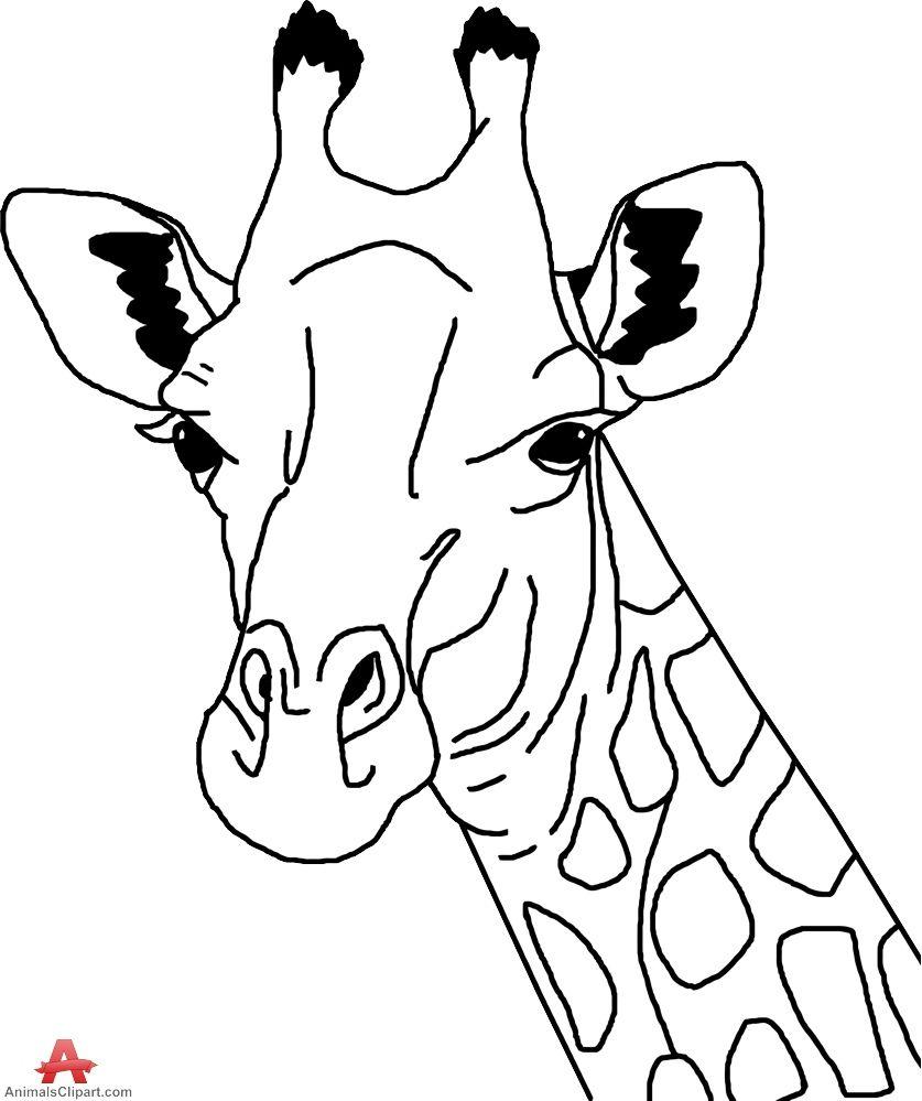 Head and neck pencil. Giraffe clipart group giraffe