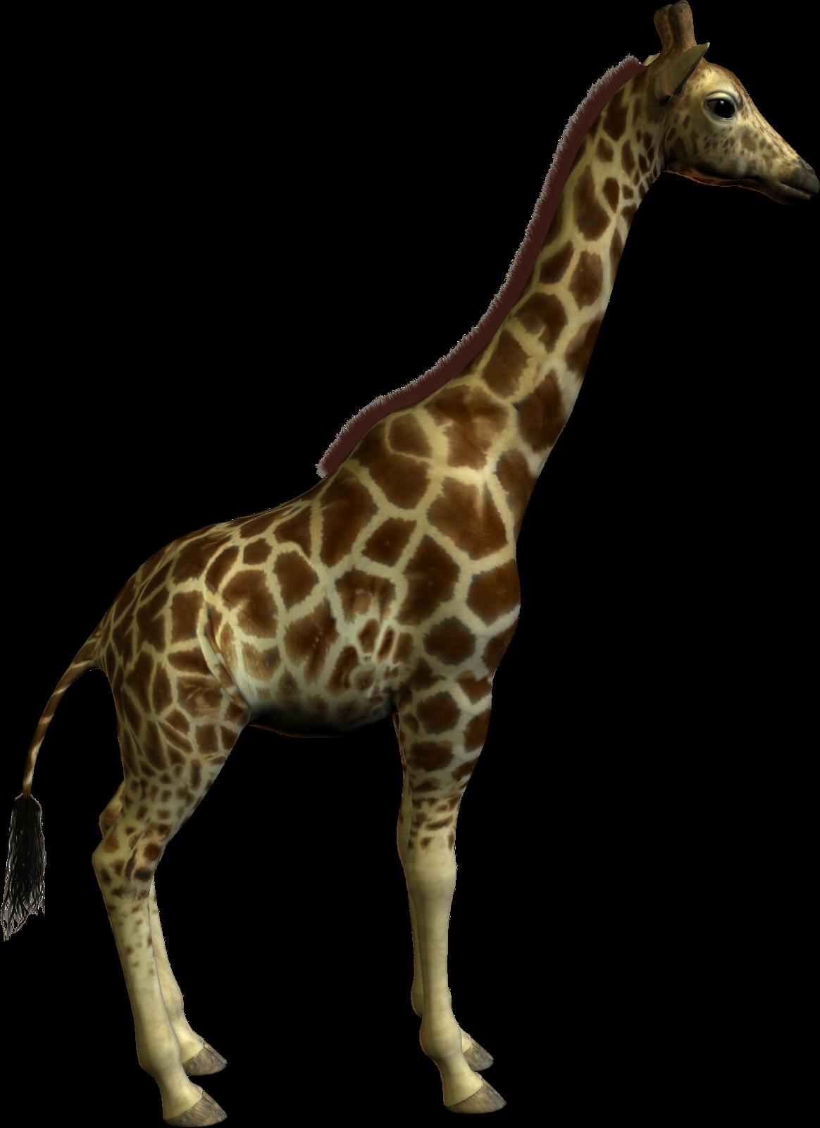 Clipart zebra giraffe. Real pencil and in