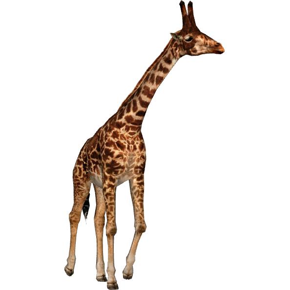 A species of from. Clipart giraffe hoof