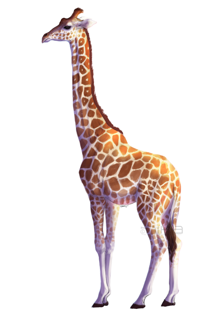Giraffe clipart short giraffe. Icon web icons png