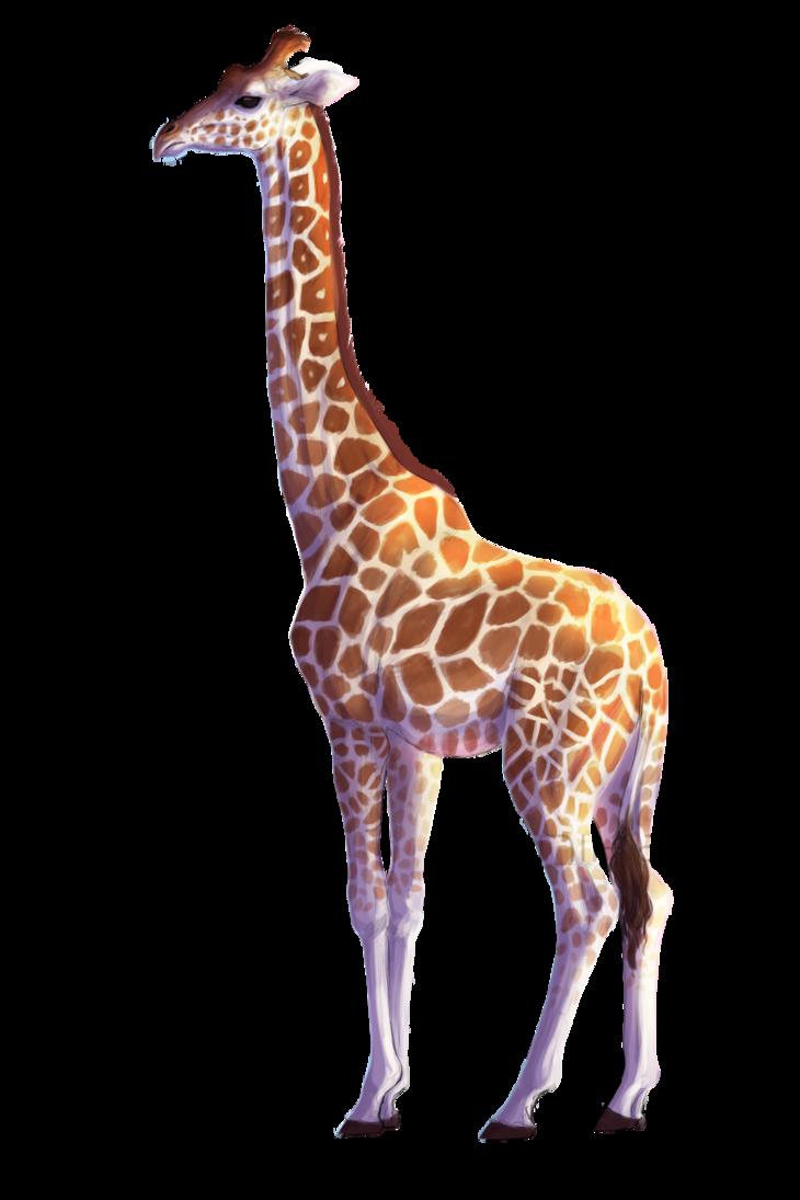 By kalambo on deviantart. Clipart png giraffe