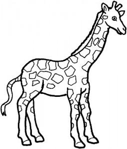giraffe clipart line art