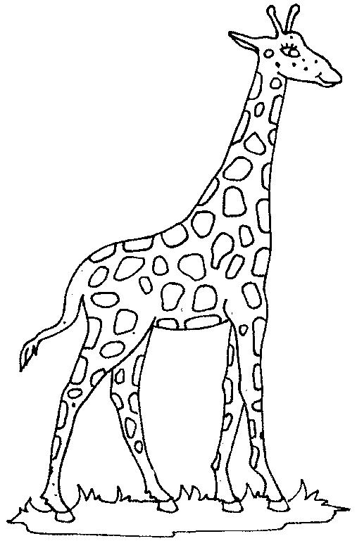 Free cliparts download clip. Giraffe clipart outline