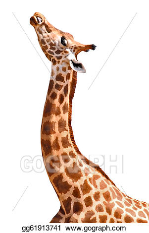 Clipart giraffe profile. Drawing isolated portrait of