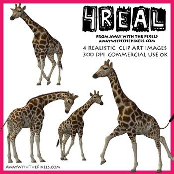 Giraffe clipart realistic.  real clip art
