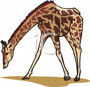 Giraffe clipart realistic. Royalty free picture