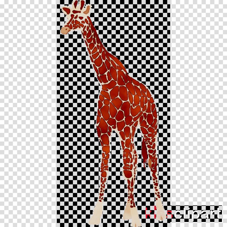 Animal cartoon tshirt wildlife. Giraffe clipart tall thing