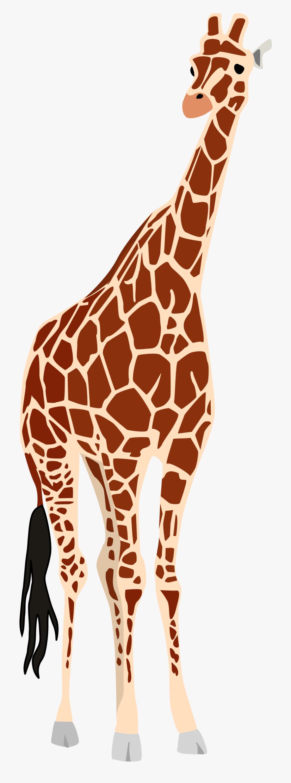 Legs free . Giraffe clipart tall giraffe