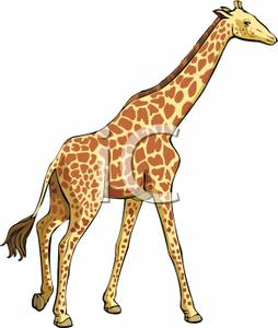 Tall clipart tall object. Giraffe royalty free picture