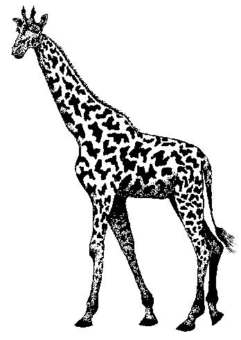 Image of baby clip. Giraffe clipart zarafa