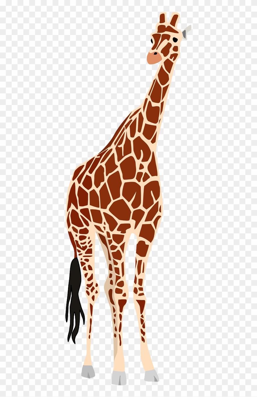 Africa safari wildlife nature. Giraffe clipart zoo animal