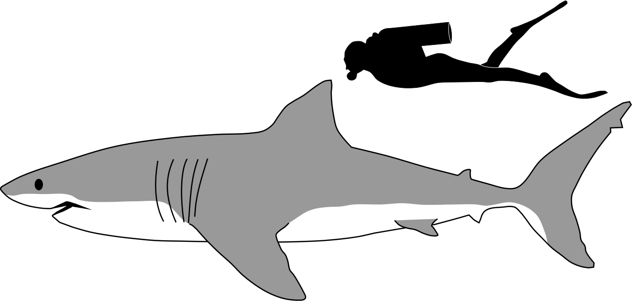 collection of side. Outline clipart shark