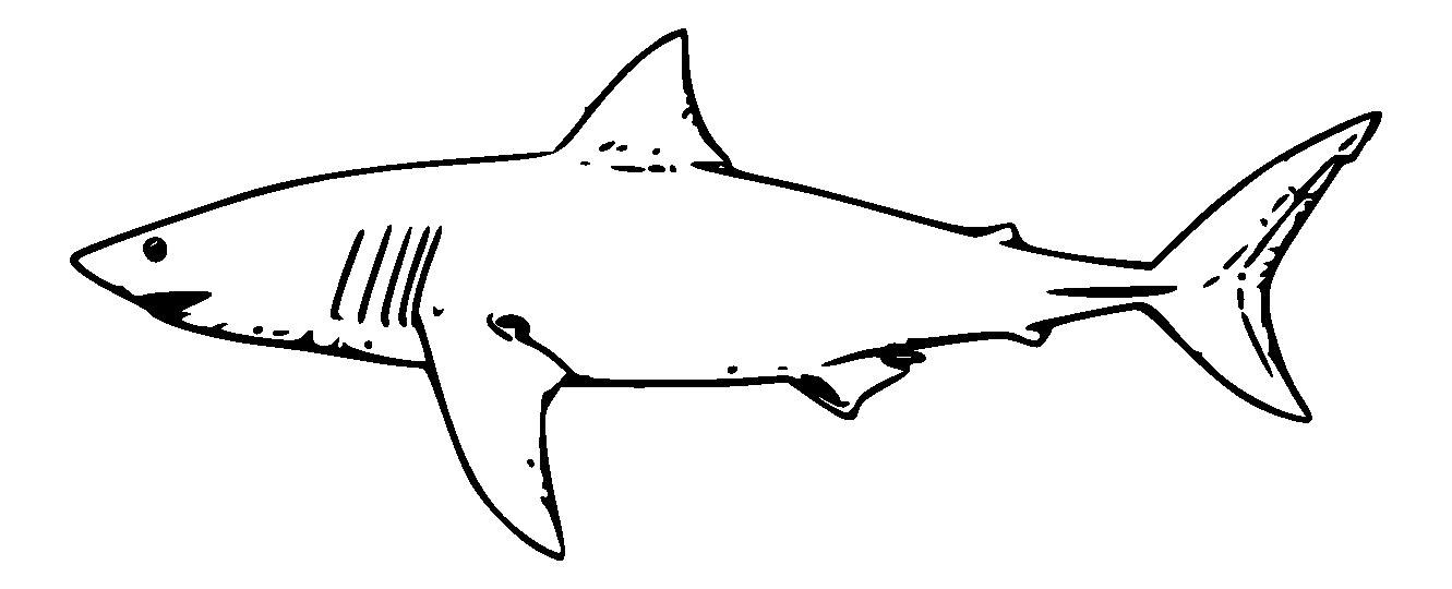 collection of black. Clipart shark blacktip shark