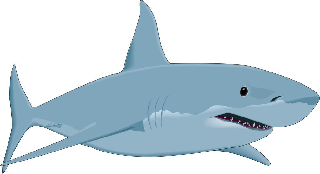 collection of sharks. Clipart shark lady