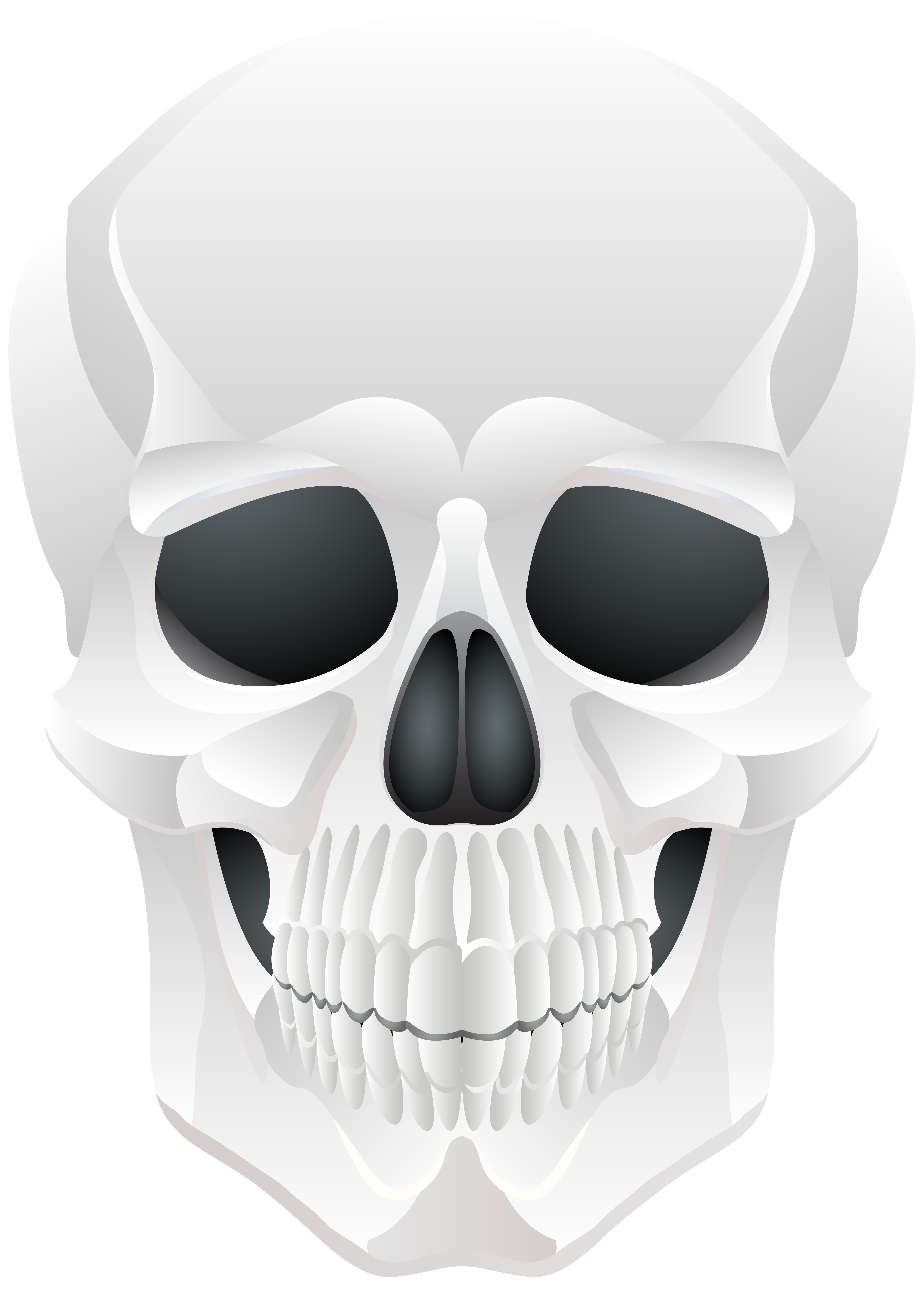 Clipart skeleton bow. Halloween skull png clip