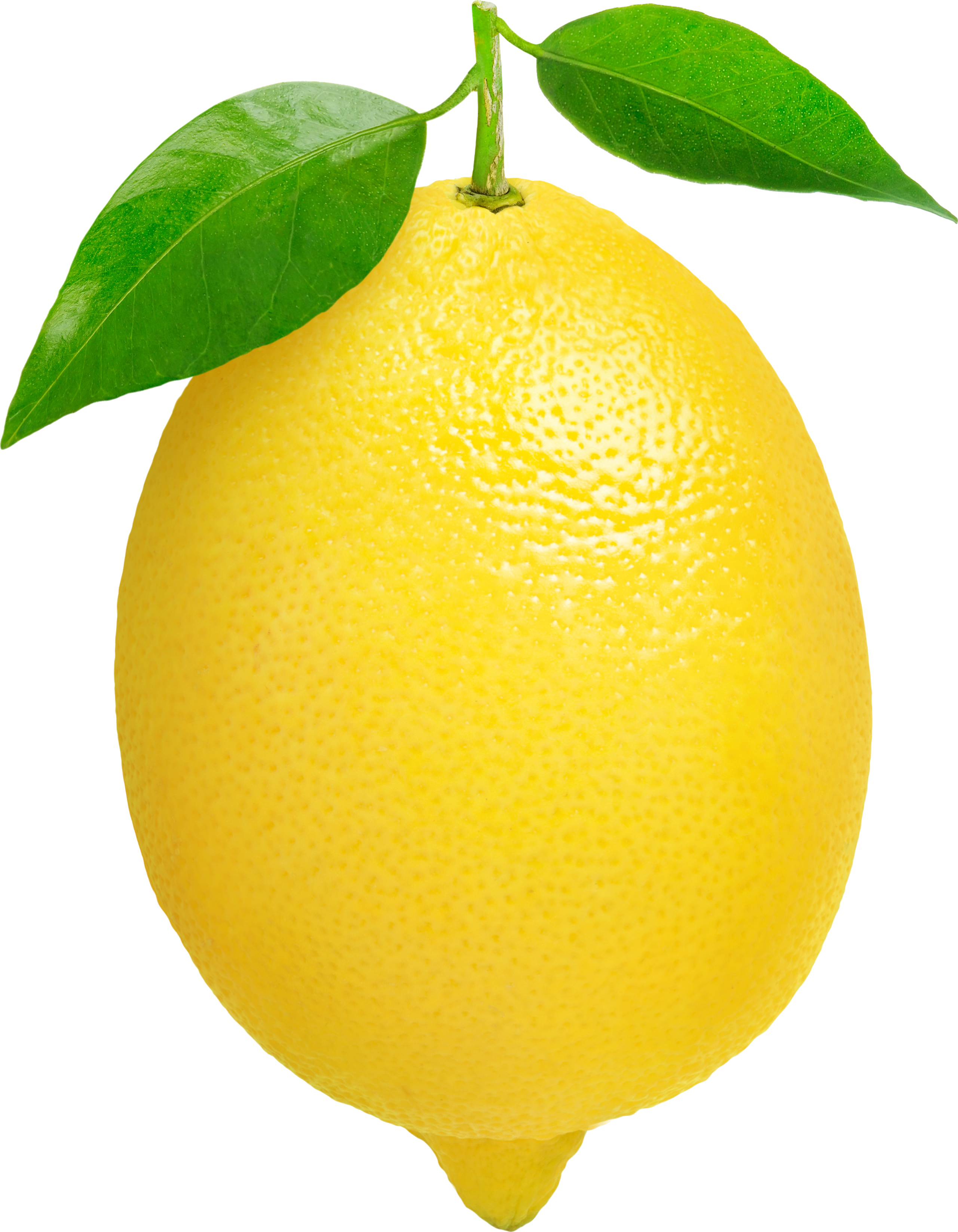 Lemon thirteen isolated stock. Lemons clipart cartoon