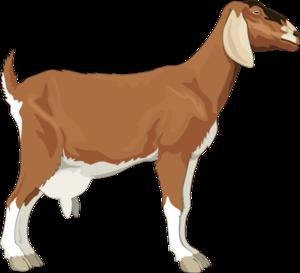 Clipart goat. Clip art at clker