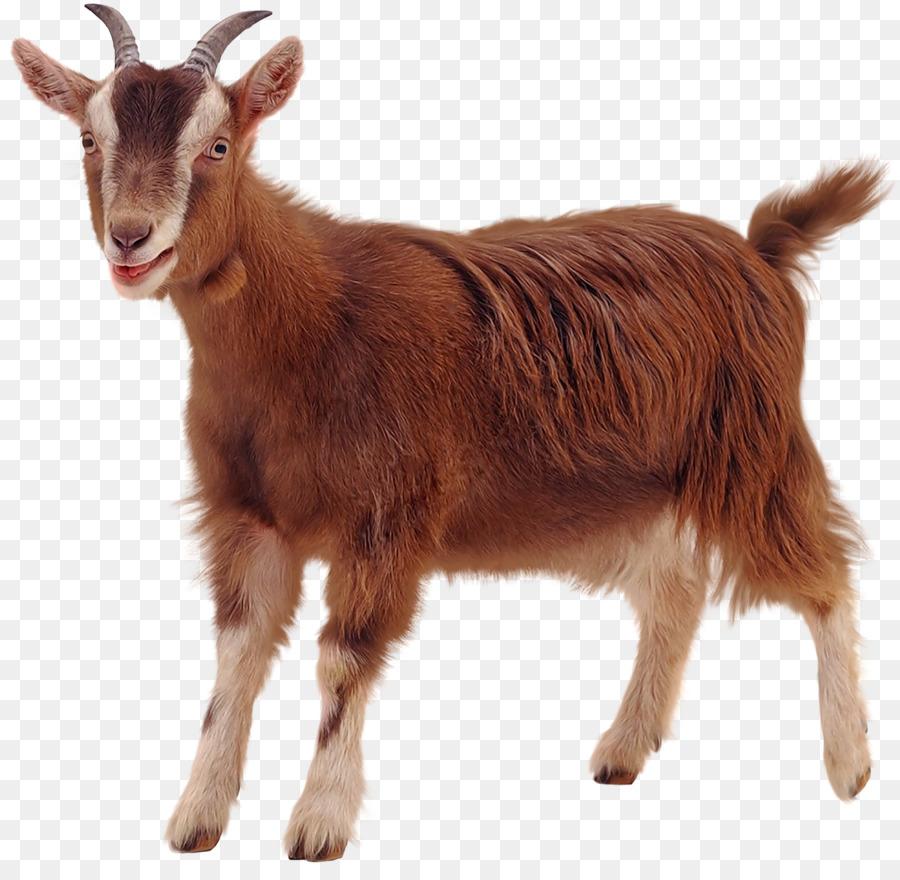 Transparent background png images. Clipart goat cinderella