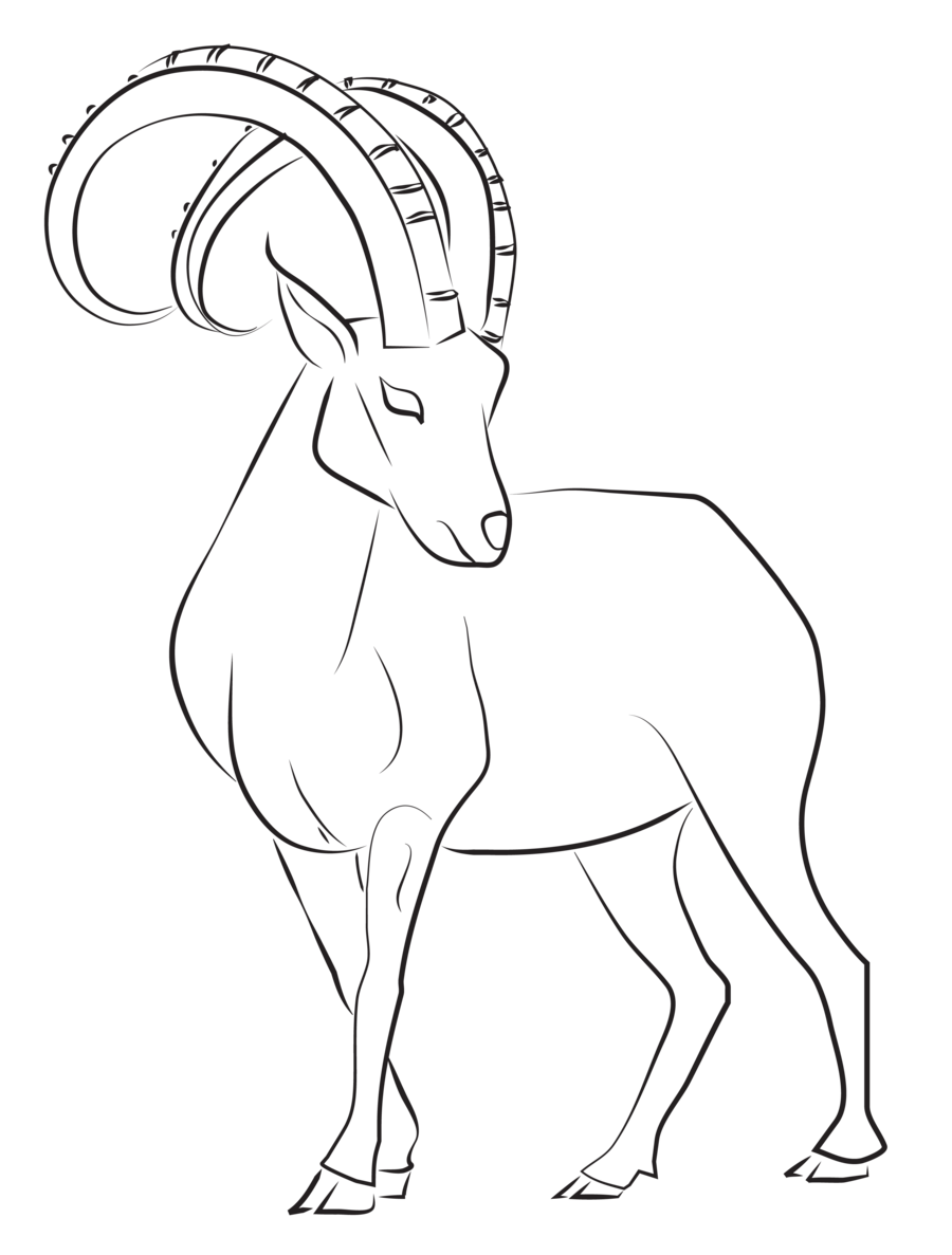 Ibex lines by astralseed. Clipart goat drawing