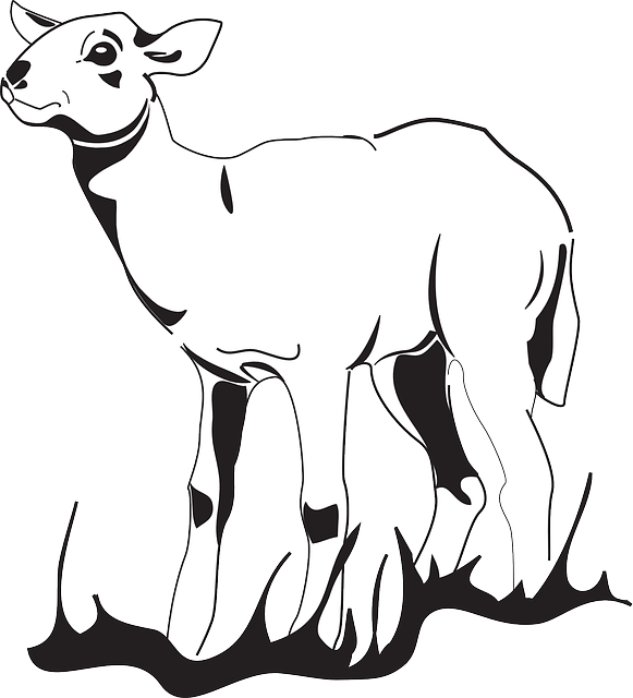 Simple lamb drawing at. Goat clipart easy draw