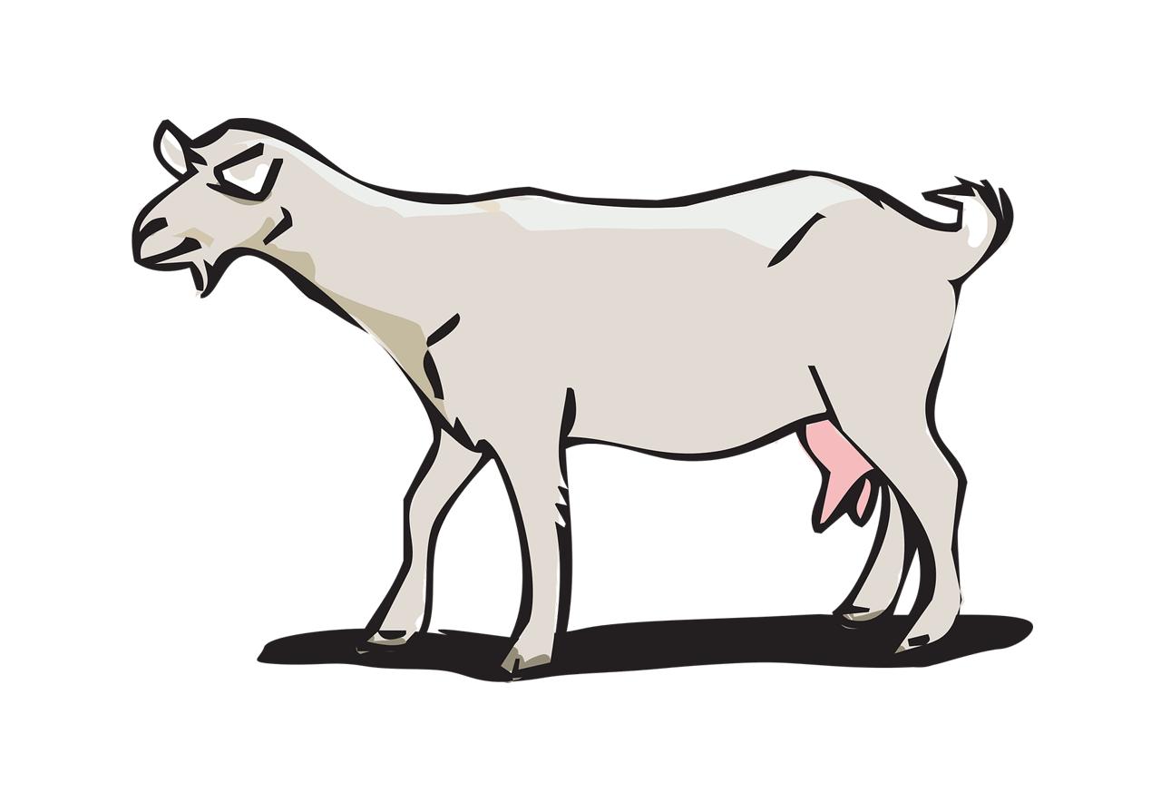 Tayyiba farms egypt. Clipart milk goat milk