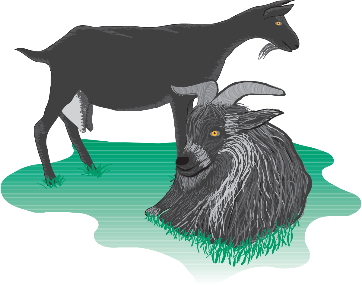 Clipart milk goat milk. Primary production of dairy