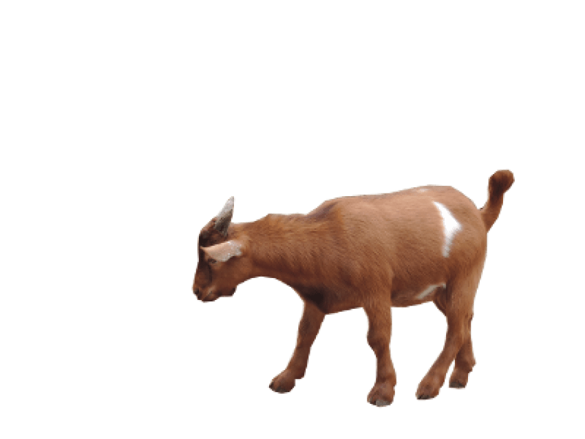 Png free images toppng. Clipart goat file