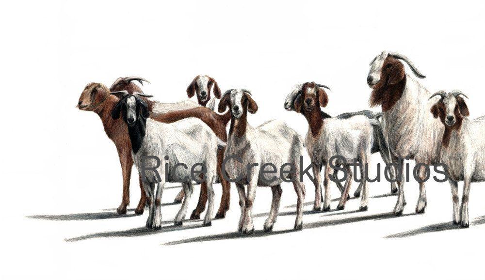 Illustration drawing of goats. Clipart goat herd goat