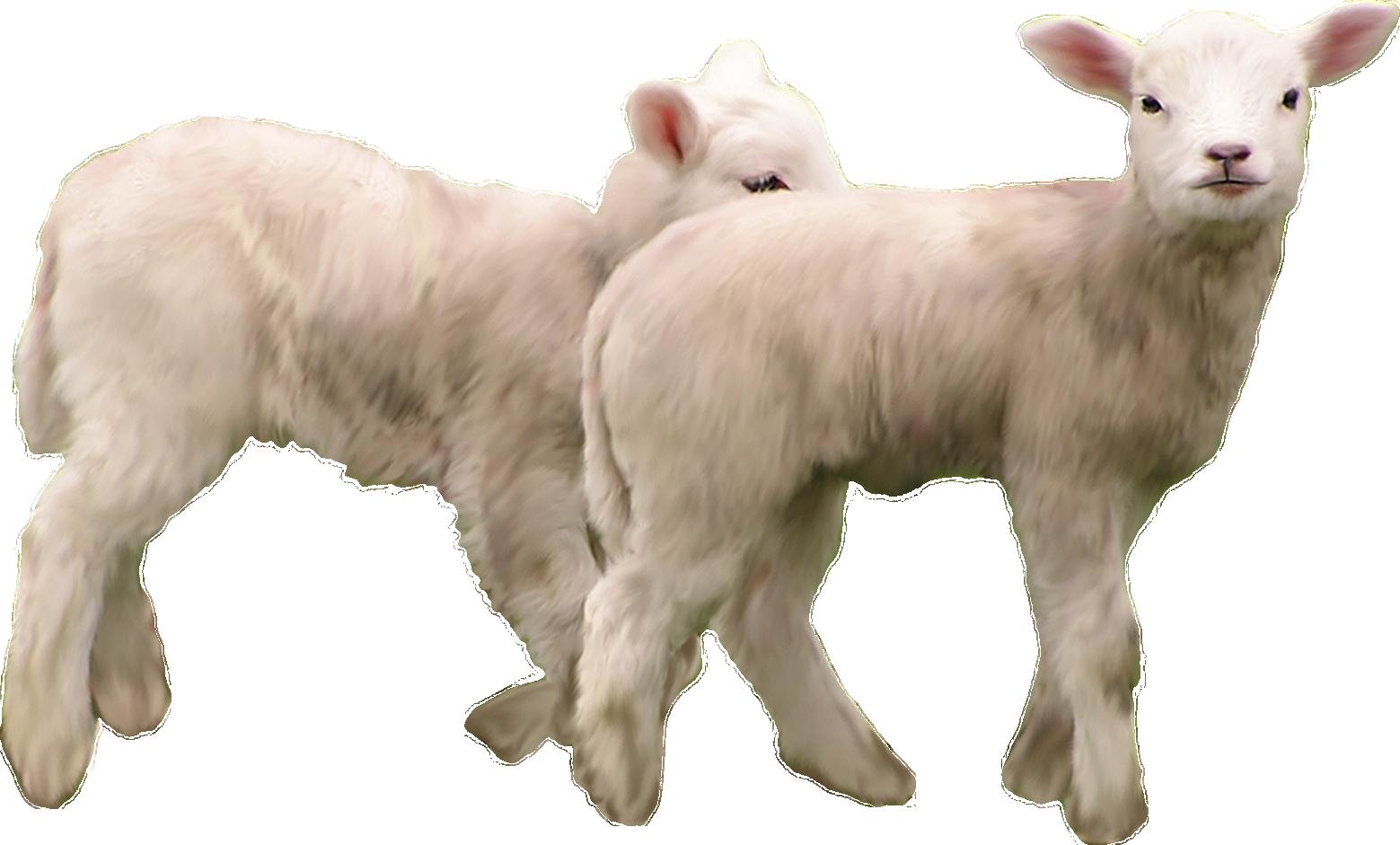 Png . Clipart goat herd goat