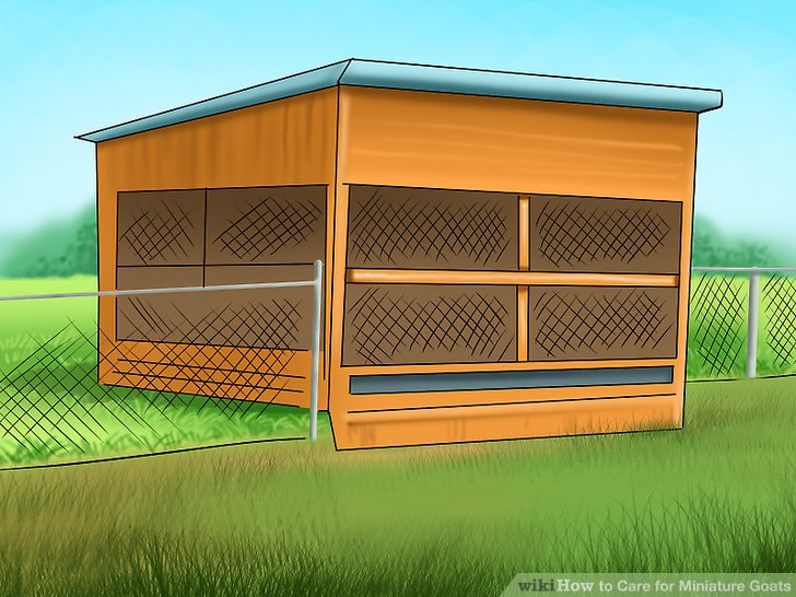 Goat clipart home. How to care for