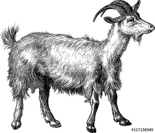 Vintage buy this stock. Clipart goat illustration