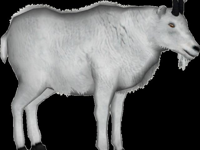 Clipart goat male goat, Clipart goat male goat Transparent ...