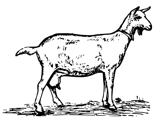 Goat clipart nanny goat. Free page of public