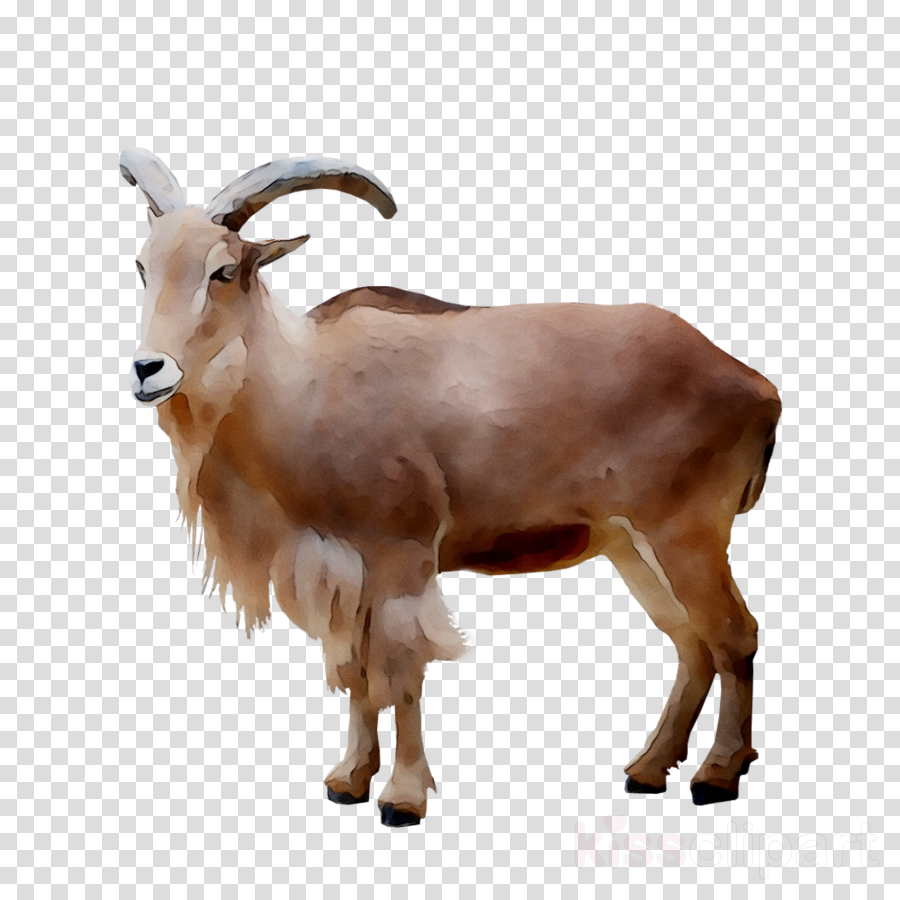 Clipart goat part. Mountain cartoon cattle goats