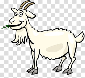 Transparent background png pngguru. Clipart goat part