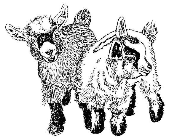 Clipart goat pygmy goat. Cliparts zone