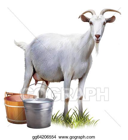 White with buckets full. Clipart milk goat milk