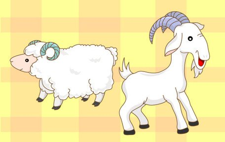 Free cartoon sheeps and. Clipart goat sheep