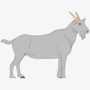 Goat clipart grey goat. Gray digestive tract of