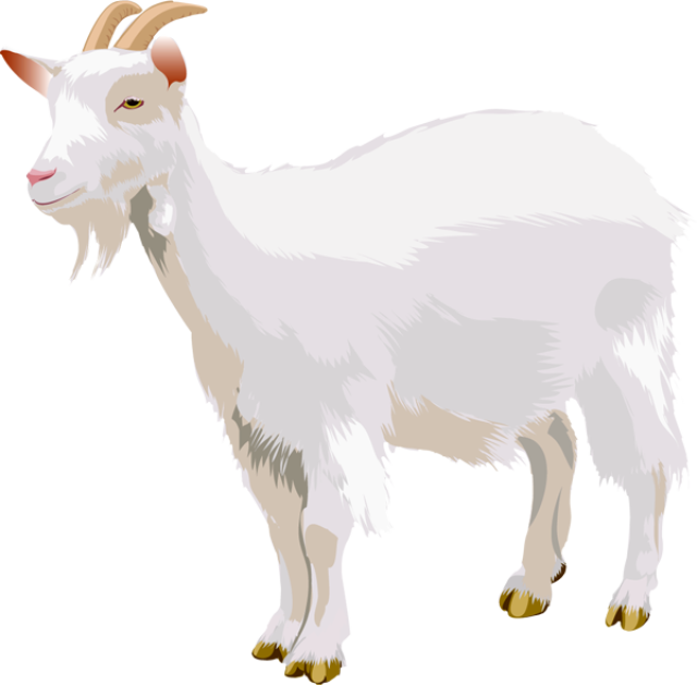goat clipart brown goat