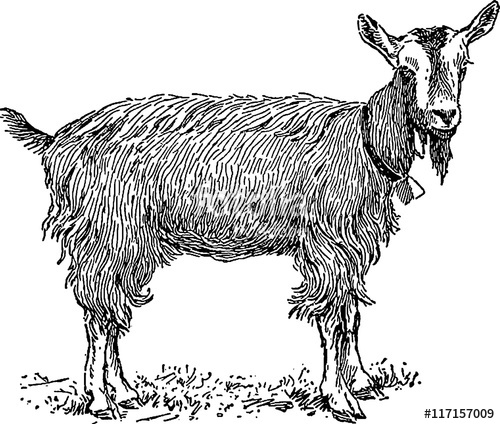 Clipart goat vintage. Stock photo and royalty
