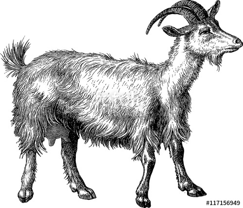 Stock photo and royalty. Clipart goat vintage